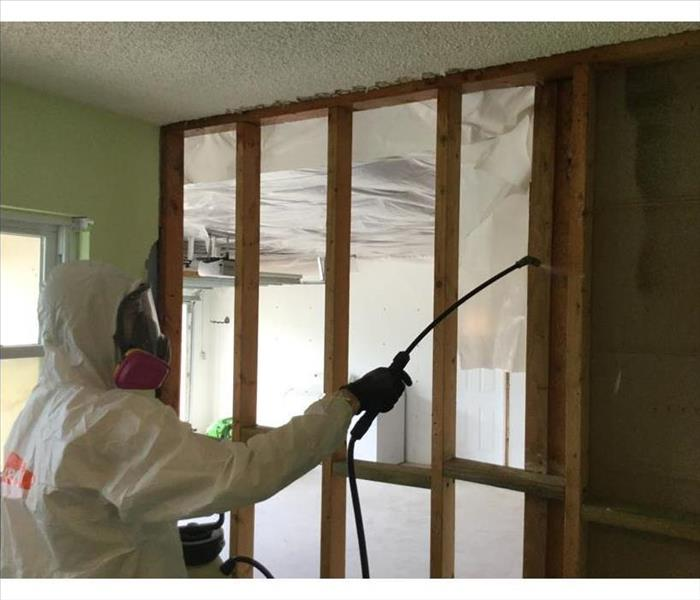 Safe Mold Remediation in Cape Coral