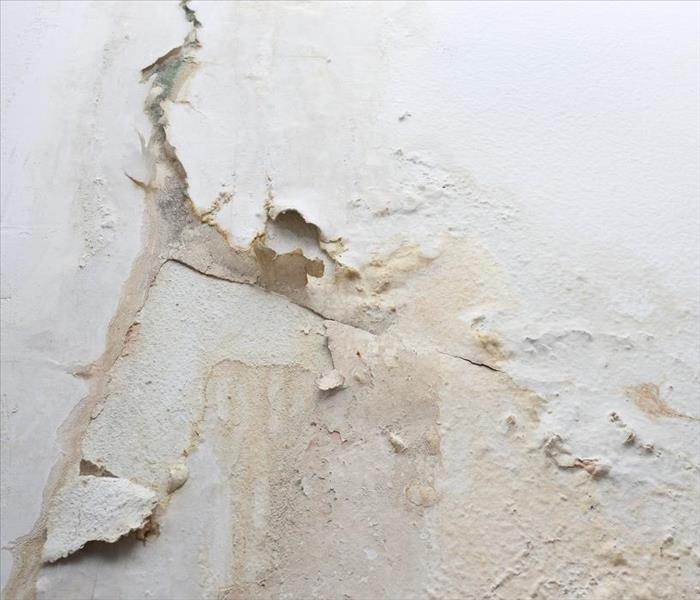 Mold Remediation Understanding the Importance of Mold Remediation in Your Bokeelia Home
