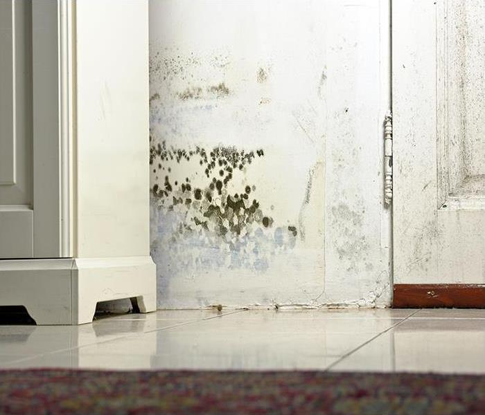 Mold Remediation Call SERVPRO First And Avoid These Mold Disasters In Pine Island