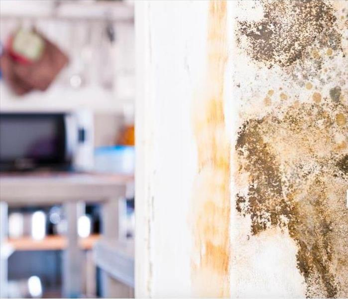 Mold Remediation Why Monitoring is Important When Dealing With Mold Damage in North Fort Myers