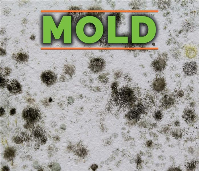 Spots of mold on a wall